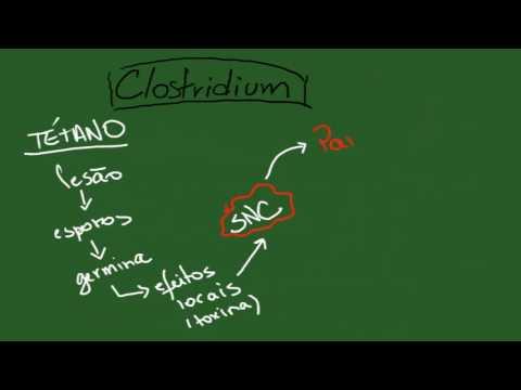 Clostridium - Resumo - Microbiologia