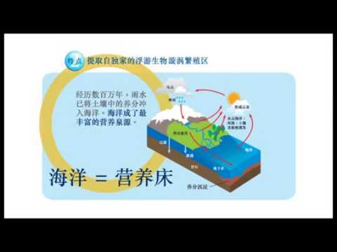Kington Chinese - Deep Sea Minerals Miracle