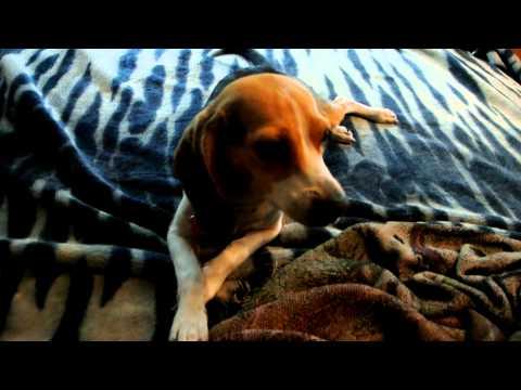 Chicken Jerkey Illness Chinese Dog Food Recall * Update * News * Please Share *PSA*
