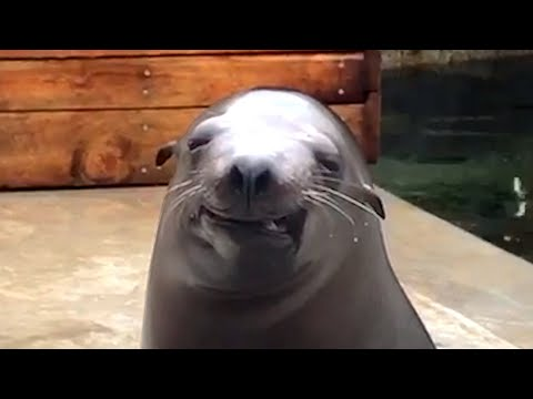 CUTE AND FUNNY ZOO ANIMALS! Funny Animal Videos