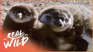 Patagonia! A Majestic Unknown Land In South America | Wild Things Documentary thumbnail