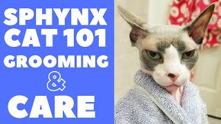 Sphynx Cat 101 : Grooming and Care