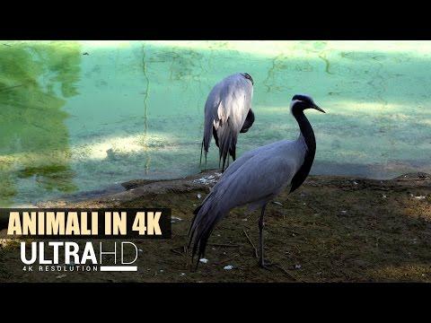 ★ Animali allo Zoo in 4K ★ - Oltre 28 minuti di animali vari - Sony a6300