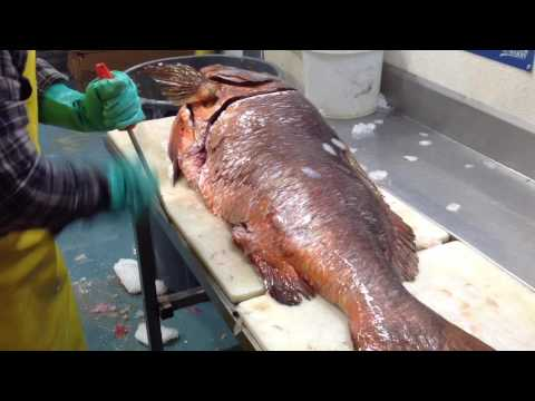 New Orleans Fish House Cutter Filleting A Cubera Snapper