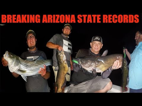 AZ Catfishing Breaking State Records (WE GOT SO MANY)