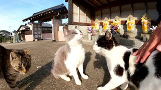 【猫島】お洒落なお地蔵様の前にたくさんの猫達が集まってきた