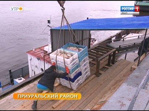 Ямальские промысловики добыли на 600 тонн больше, чем в прошлом году
