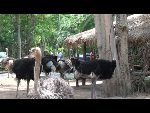 Khao Kheow Open Zoo in Thailand upgraded