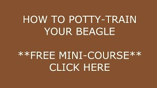 **how To Potty-train A Beagle Puppy**a.s.a.p**click Here