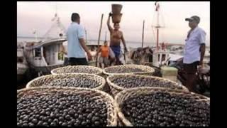 Batuca Feira - ManuMoa - Peixe Frito - Ver-o-Peso / Amazônia / Belém / Pará