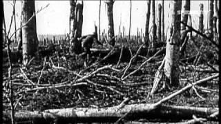 Der Erste Weltkrieg: Kriegsbegeisterung - Realität des Krieges - Ernüchterung