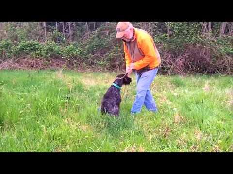 Forced Fetch Dog Training