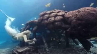 Девушка и подводный мир океана.(Девушка и подводный мир океана., 2016-12-03T11:52:13.000Z)