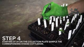 Phylos Plant Sex Test - 88 Seedling Plate - Sample Collection instructions