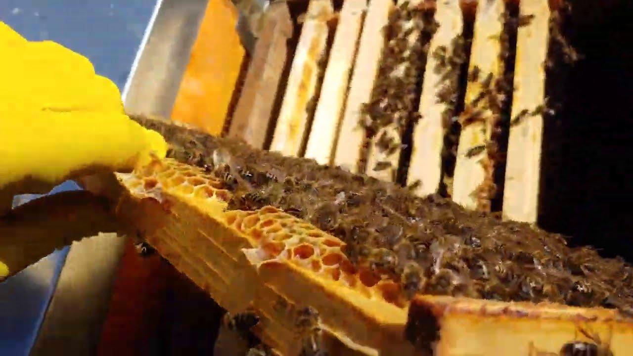 pâine de albine pentru tratamentul vederii
