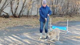 Омский приют для собак «ДРУГ» занятие 2017 10 20 первая группа