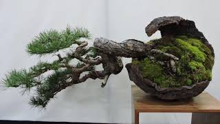 Bonsai Expo Show 2019 Part 2