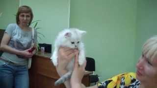 Как оформить родословную на кошку