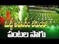 హైడ్రోపోనిక్ సాగు పద్ధతి   Hydroponic Farming   hmtv Agri