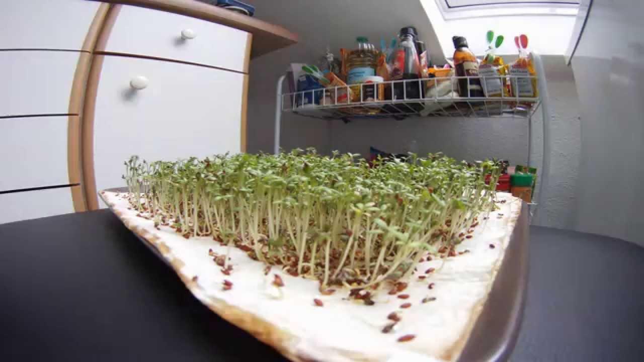 Küchenkrepp Kresse ~ kresse wachstum timelaps youtube