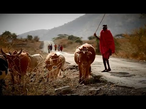 Maasai Cattle, Biogas and Tires: Entrepreneurs Find Innovative Use For Slaughter Waste