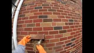 GoPro: Bird Nest Removal