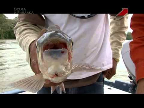 фото акула никарагуа озера пресноводная