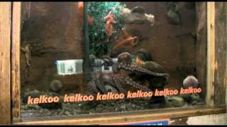 Harry Potter and the Deathly Hallows vs Megaminds: Ollie the Kelkoo Octopus predicts the winner