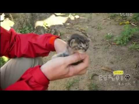 【悶絶注意】可愛すぎる子猫 in Cuba:Cute cat meows in Cuba