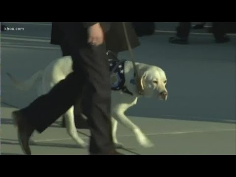 Whats next for President George H.W. Bushs service dog Sully?