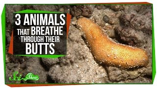 3 Animals That Breathe Through Their Butts