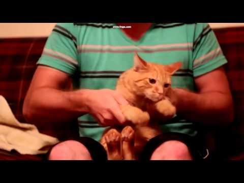 Mi Mi Mi Meow Sexy Meow