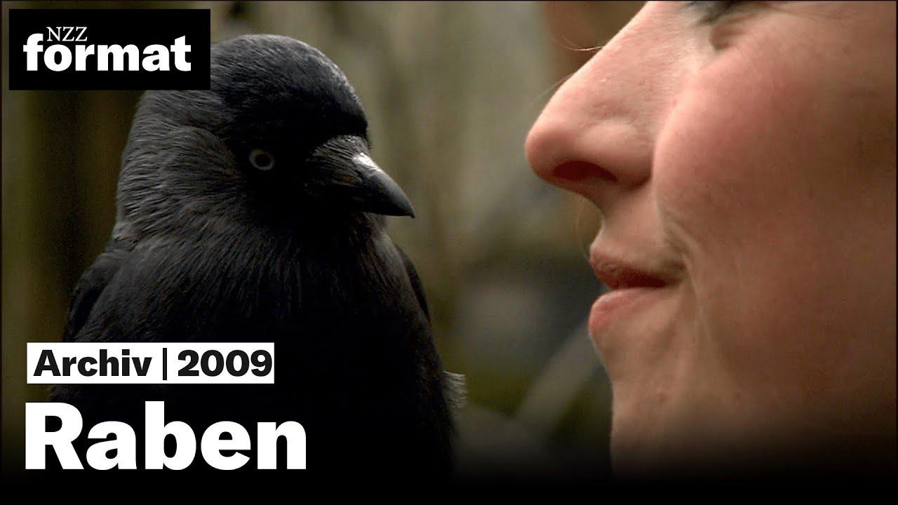Download Schlaue Vögel, schlechter Ruf: Raben (NZZ Format 2009)