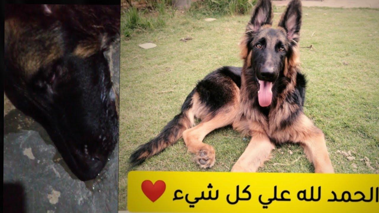 كلبي تعب وكان بيموت والحمد لله ابتدي يتعافى | شكرا ليكم جدا ❤️