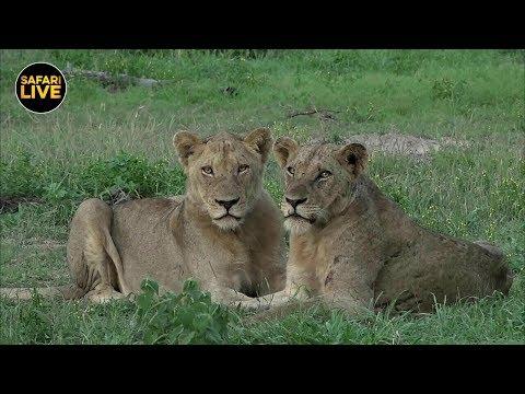 safariLIVE - Sunrise Safari - January 19, 2019