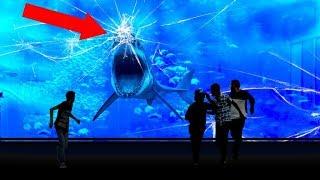 Porque Nenhum Aquário No Mundo Tem Um Tubarão Branco?