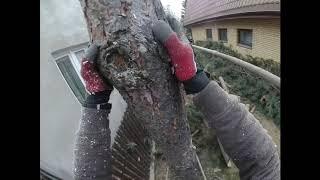 Wycinka drzew wokół domu