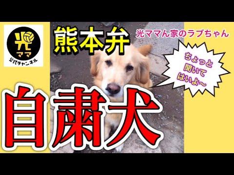 犬 動画 自粛