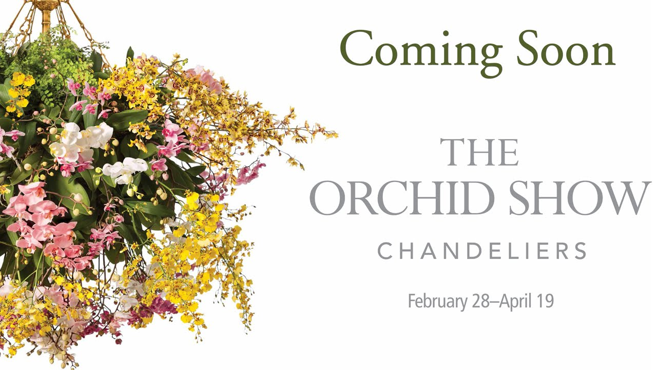 The 2015 orchid show is coming youtube mozeypictures Gallery