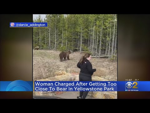 Woman Charged After Getting Too Close To Bears At Yellowstone National Park