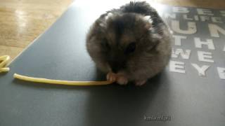 twister eating spaghetti
