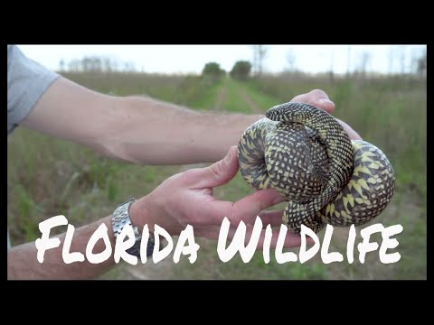 Florida Wildlife