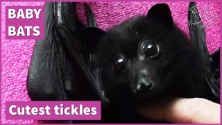 Cute bat baby loves tickles [Loki being adorable] thumbnail