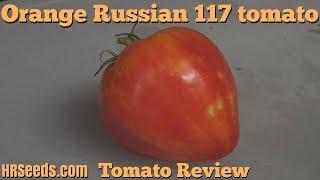 ⟹ Orange Russian 117 tomato | Solanum lycopersicum | Tomato review 2018
