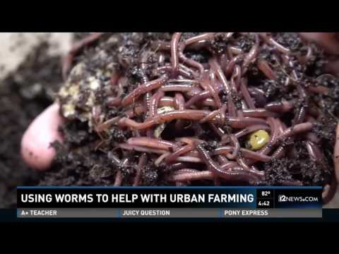 Worm Composting Channel 12