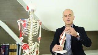 Eklem Ağrıları Neden Kaynaklanır, Ne İyi Gelir? Dr. Metin Mutlu