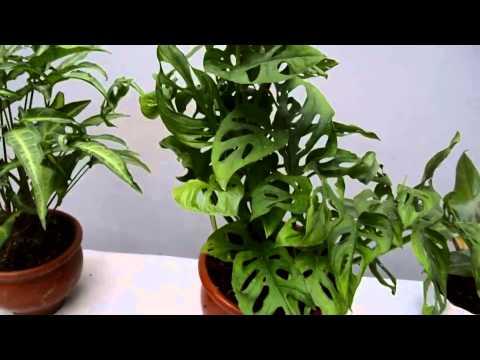 Cultivo de los helechos 1 doovi for 5 plantas decorativas