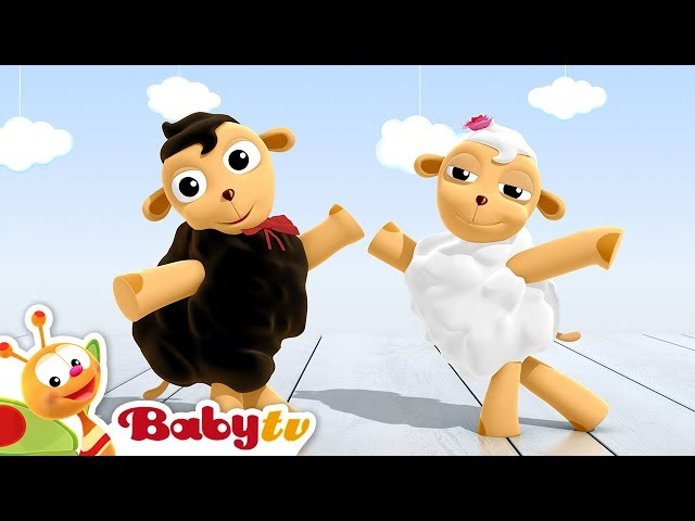 Cha-Cha-Cha Dancing Sheep | BabyTV