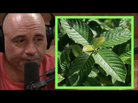 Joe Rogan | Kratom Gets You High!!