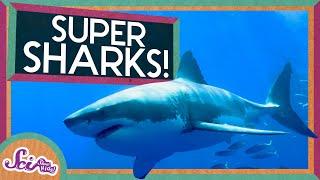 Super Sharks!